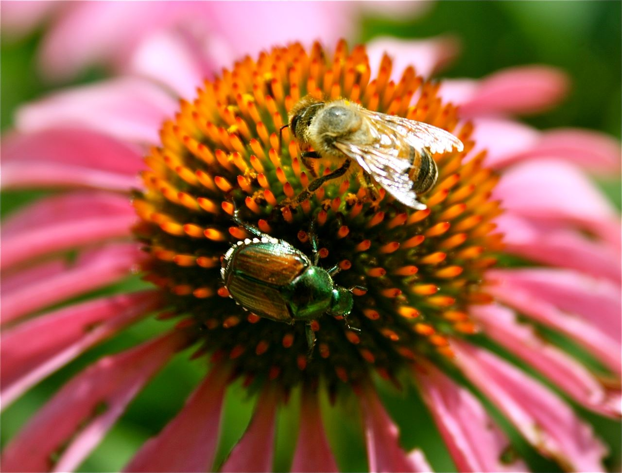 Beetle and Bee on Flower, Rebecca Garris