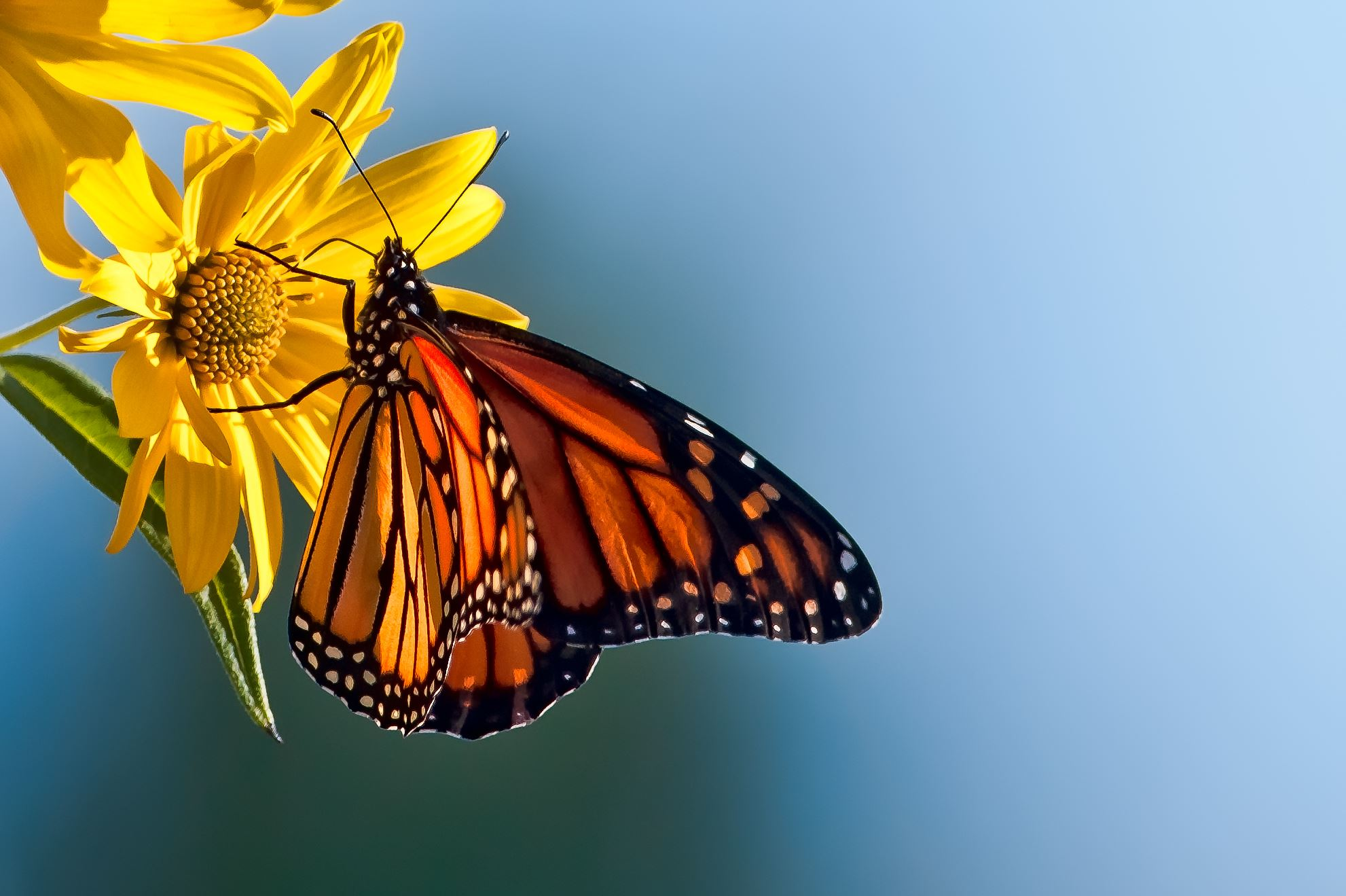 Butterfly on Flower by Rona Schwarz